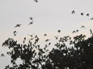Many birds in flight at sunset